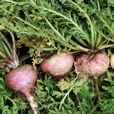 organic maca root